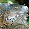 Sfeerimpressie Costa Rica Familiereis: Zweven tussen de boomtoppen